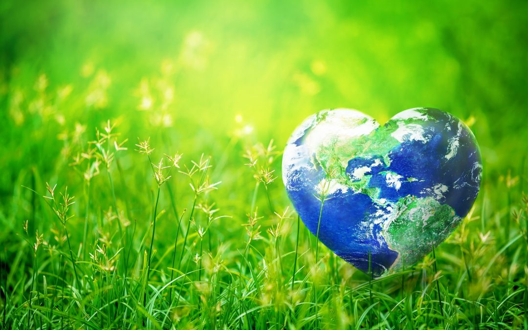 Immundiagnostik Transitions to Eco-Friendly Assay Kit Packaging